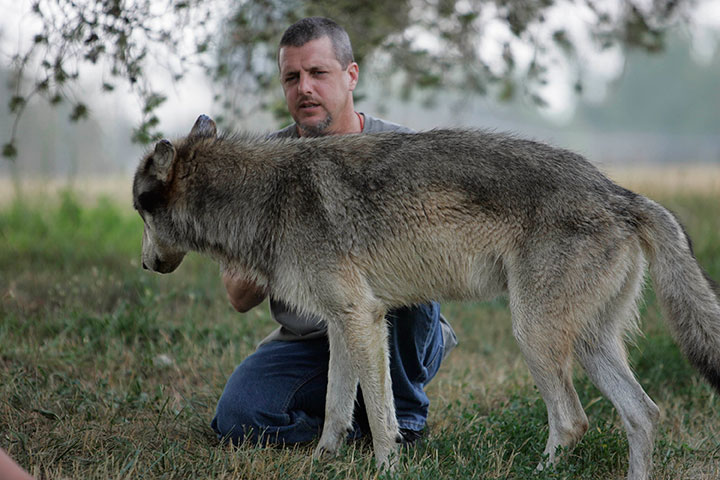 Kevin with wolf - 3