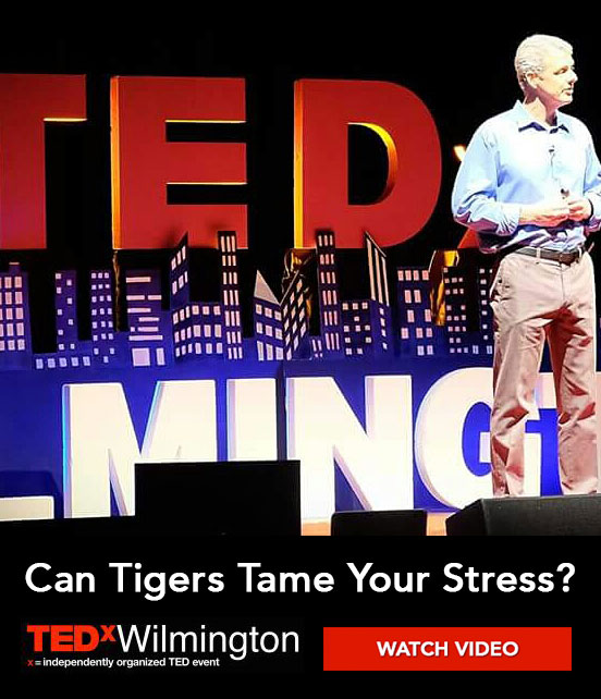 Can Tigers Tame Your Stress?